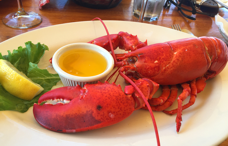 Now take a look at this nice guy - a perfect Maine meal. I assure he didn't stay like this for long.